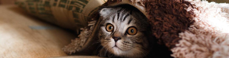 Опросы для владельцев кошек