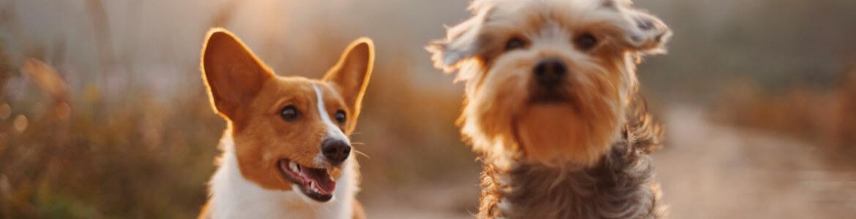 Опросы для владельцев собак